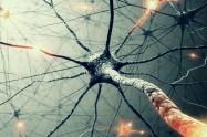 biology-microscopic-cells-neurons-background-1280x720-wallpaper
